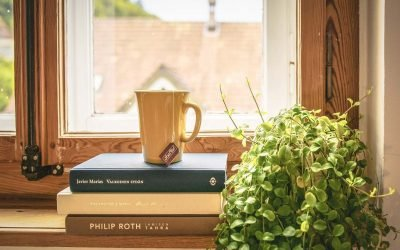 7 piante semplici da curare alla portata di tutti